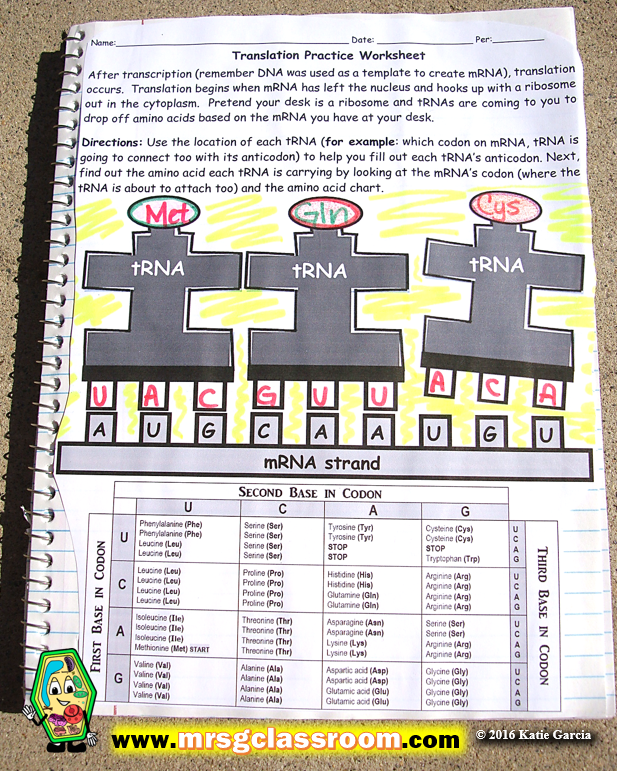 RNA & Protein Synthesis Interactive Notebook – Mrs Gs Classroom